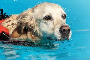 สระว่ายน้ำสำหรับสัตว์เลี้ยงเอสแอลวี โทร. 02-866-0260
