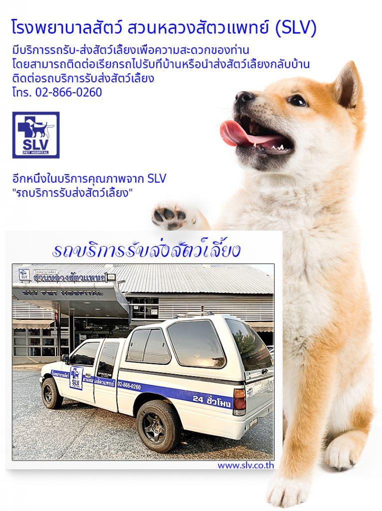 เอสแอลวีเพิ่มรถบริการรับส่งสัตว์เลี้ยง